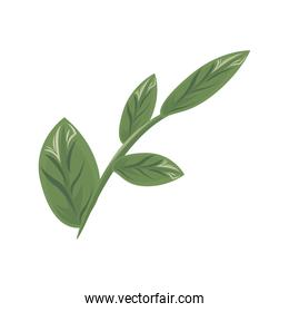 branch with ecology leafs plants green nature icons