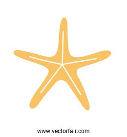 starfish with a yellow color