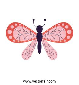 beautiful butterfly with a pink and red color