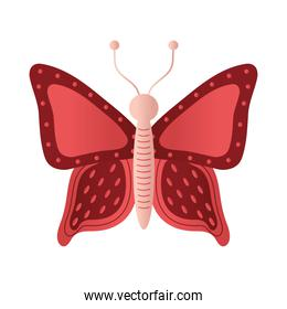 butterfly with a red color