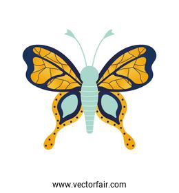 butterfly with a gold color