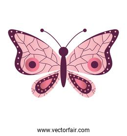 butterfly with a white background