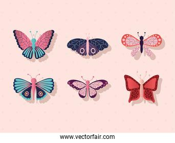 bundle of butterflies on a pink background
