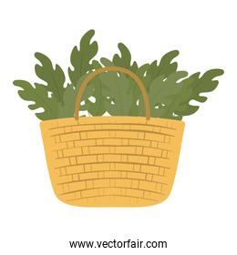 basket full of green leaves on a white background