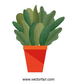 plant with a green color on a pot