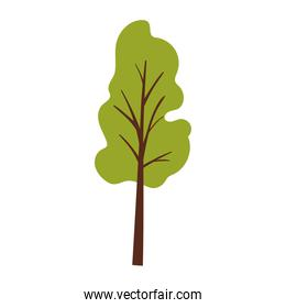 green tree over a white background