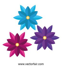 bundle of three flowers colors icons