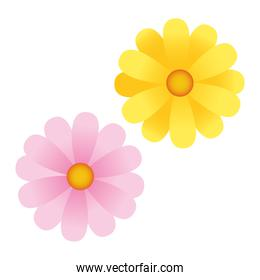 flowers yellow and pink colors icons