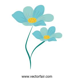 blue flowers floral nature isolated icon vector