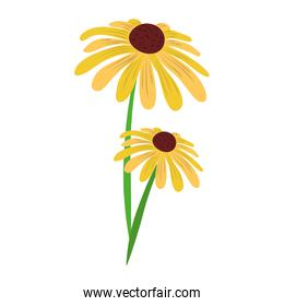 flower flora nature decoration isolated icon vector
