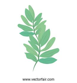 branch leaves nature foliage isolated icon vector