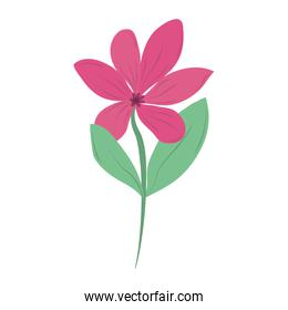 flower nature floral isolated icon vector