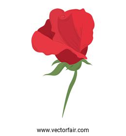delicate flower rose romantic isolated icon vector