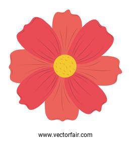 cute flower bloom nature isolated icon vector