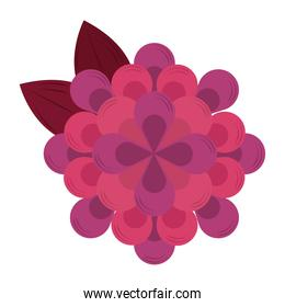 decorative flower nature isolated icon vector