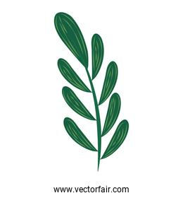 tropical monstera leaf foliage abstract style icon