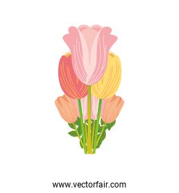 flowers tulip leaf floral in cartoon style white background