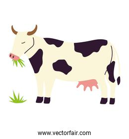 farm and agriculture cow eating grass cartoon