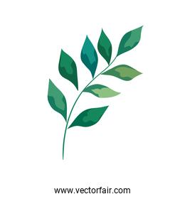 branch with leafs plant foliage icon