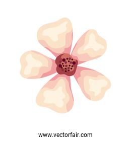 beautiful flower color white nature icon