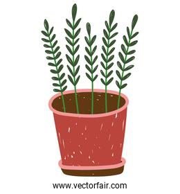 gardening, potted plant leaves nature