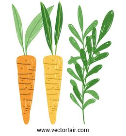 gardening agriculture carrots vegetables plants nature