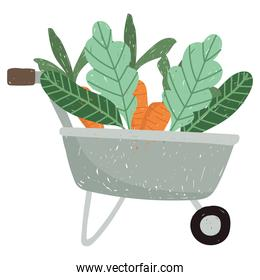 gardening wheelbarrow with carrots and leaves