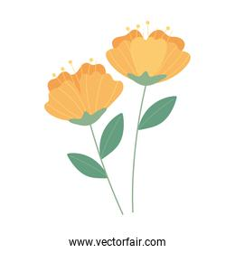 flowers delicate nature decoration white background