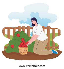 farmer female cultivating tomatoes in the farm