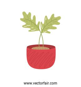home garden potted plant decoration