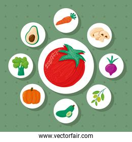 tomato and bundle of eight vegetables healthy food icons