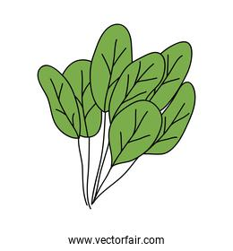 spinach leaves icon, flat style
