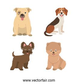 pets dogs puppy little animals domestic canine