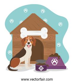 pet dog beagle breed house and bowl with food