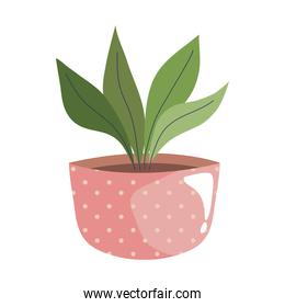 house plant in pink ceramic pot