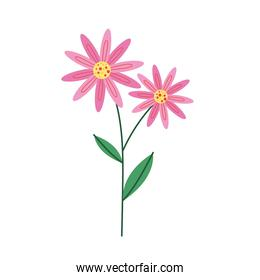 pink petals flowers nature icon