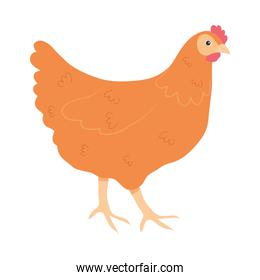 cartoon chicken icon, colorful design