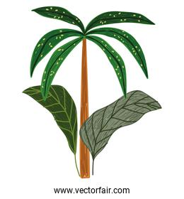 tropical exotic palm plant leaves nature