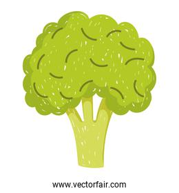 healthy food broccoli vegetable icon isolated style