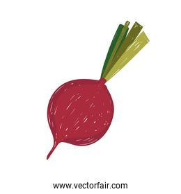 healthy food vegetable beetroot flat icon style