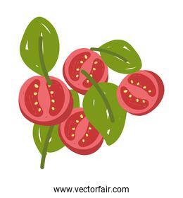 healthy food tomatoes harvest flat icon style