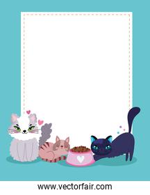 cute cats with food bowl and empty blank banner