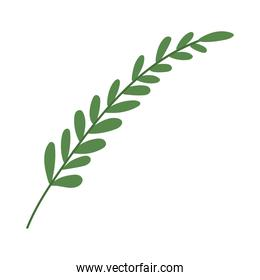 plant with green leaves icon