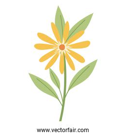 flower with a yellow color on a white background