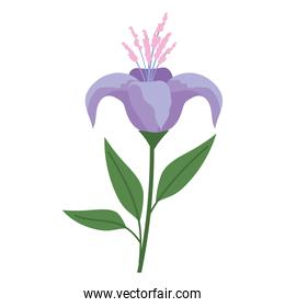 flower with a purple color on a white background