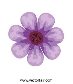 beautiful purple flower decorative icon