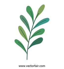 branch with leafs plant decorative seasonal icon
