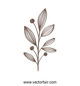 branch with leafs plant and seeds hand drawn style icon