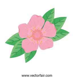 beauty pink flower and leafs spring season icon