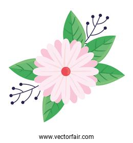 beauty pink and white flower and leafs spring season icon